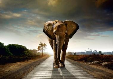 AG Fototapeta elephant - FTXXL0108